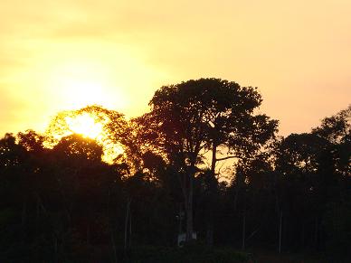 20110422181206-amazona-ucha.png